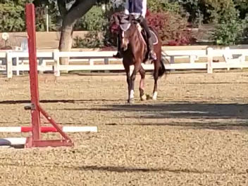 Motivating your equine partner (and yourself) with positive reinforcement