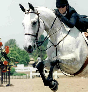 Patricia Lincourt offers trainingin dressage, hunters and jumpers at the Paddock Riding Club, Los Angeles