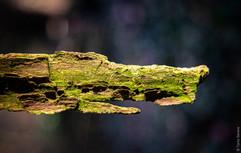 Code image 004-01  Titre de l'œuvre L'ALLIGATOR DES AIRS Je suis un alligator des airs qui plonge dans le ciel et ressens la lumière du soleil.  Date de création 09 03 2017  Lieu de création Niederhausbergen (FR)  Nom de la galerie Les Animaux  Pour commander cette œuvre, cliquez sur « commander » Téléchargez le formulaire en le nommant à votre nom Une fois téléchargé, remplissez-le et renvoyez-le à l'adresse email indiquée.
