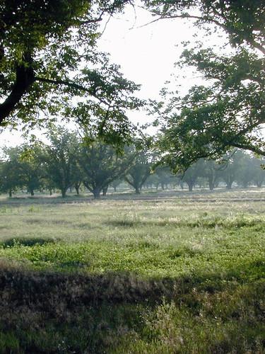 Weyrich Farm Mornings