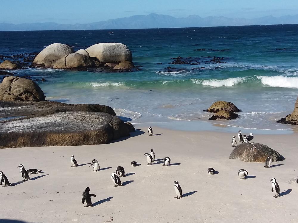 Ciudad del Cabo, Sudáfrica, Boulders Beach,