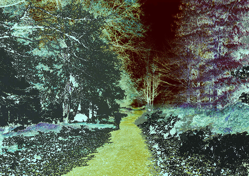 Simon_Francis_Forest_Apparation_3.jpg
