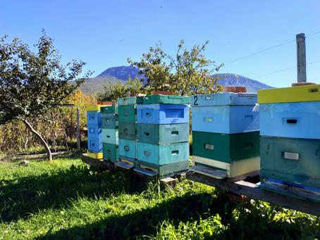 Мед и деревья из цетрарии – забота о вашем организме