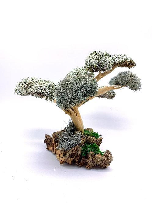 Сувенирное дерево с кронами из цетрарии и стволом из самшита