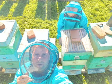 Мед с пасеки и деревья из цетрарии