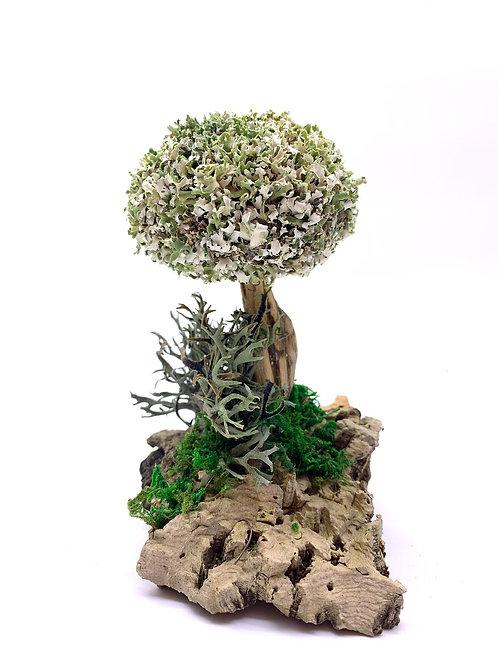 Маленькое дерево из цетрарии
