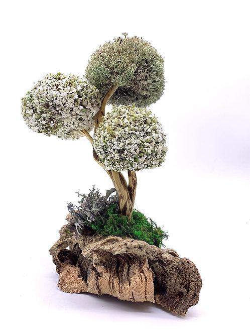 Дерево из цетрарии с тремя шапками