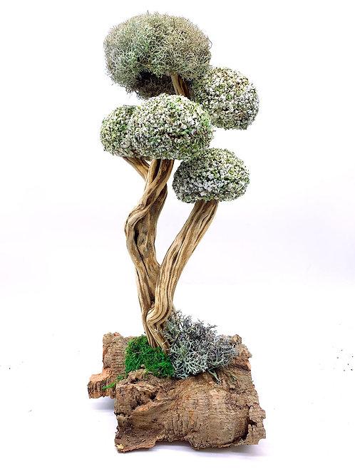 Большое дерево с кронами из цетрарии