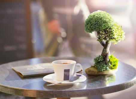 Удивительный подарок - живое дерево с кронами из цетрарии