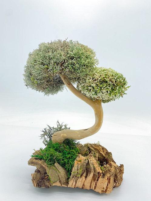 Дерево из цетрарии с двумя шапочками