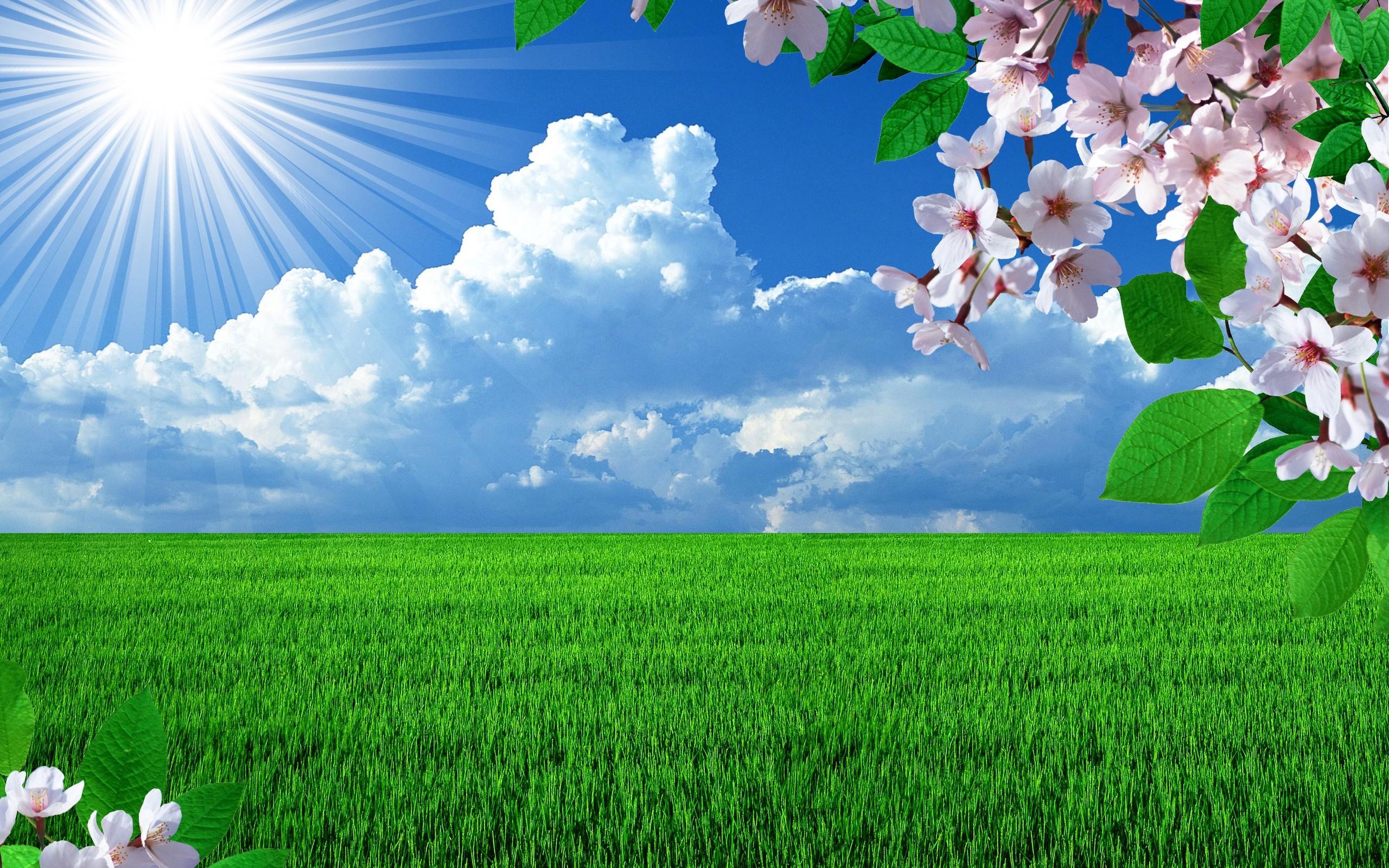 Grassy field with sun