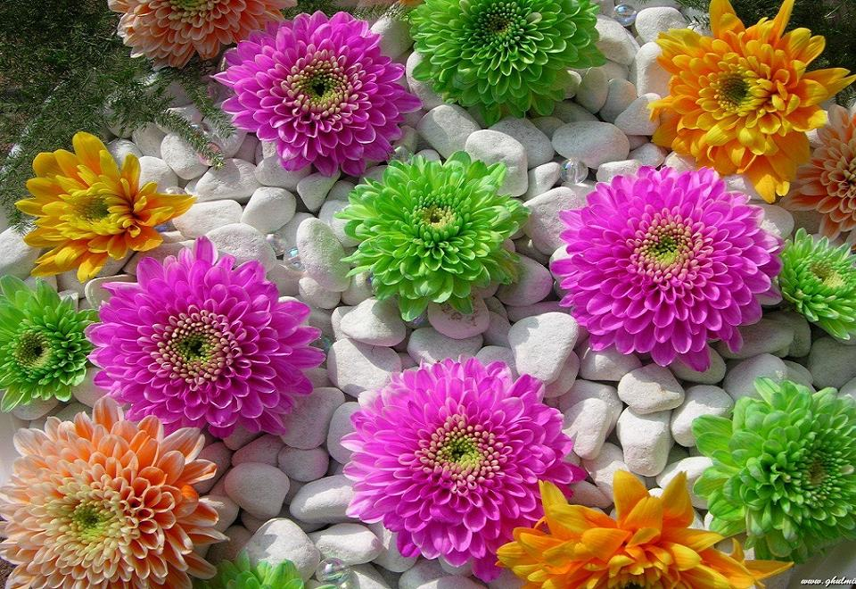 Most-beautiful-flowers-free-nature-screensavers-and-wallpaper6