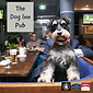 Chorley, Dog Inn Pub, Whitle-Le-Woods, Online rstaruant, pub, bar