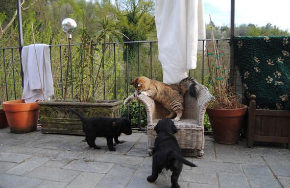 Cuccioli con gatto Maia