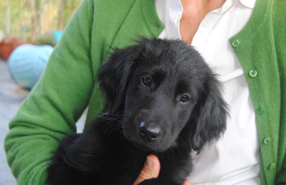 Puppy from A-litter