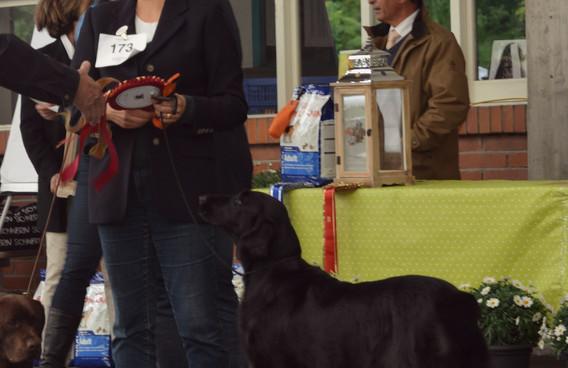 Smilla Best Gundog in Aarau