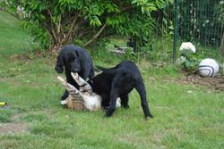 Playing with Maja