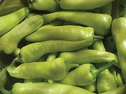 banana-pepper-harvest-1.jpg