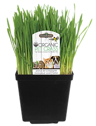 Cat Grass_New Tag.png