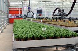 Fresh Herb Production