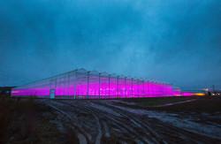 Freeman Herbs Organic House Lighting