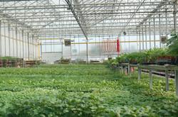 Fresh Herb Distribution