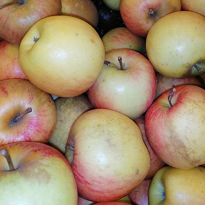 Pomme Pinova / kg