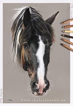 pinto_horse_pastel_final.jpg