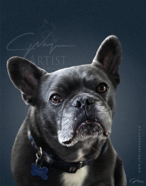 Custom Digital Pet Drawing - Colour Portrait