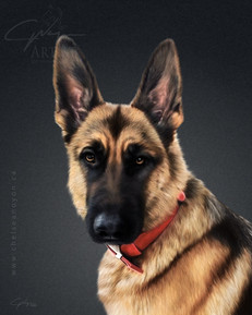 """German Shepherd"" 2020"