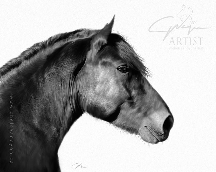 """Black Horse"" 2021"