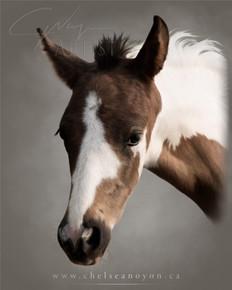 """Pinto Foal"" 2021"
