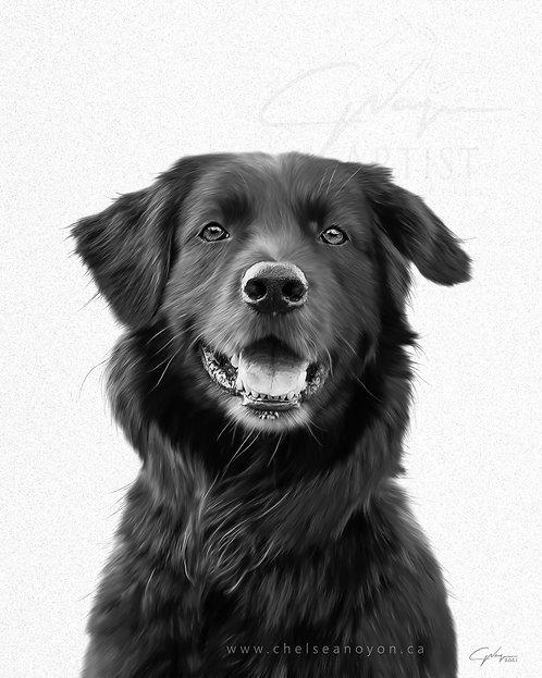 Custom Digital Pet Drawing - Black and White Portrait