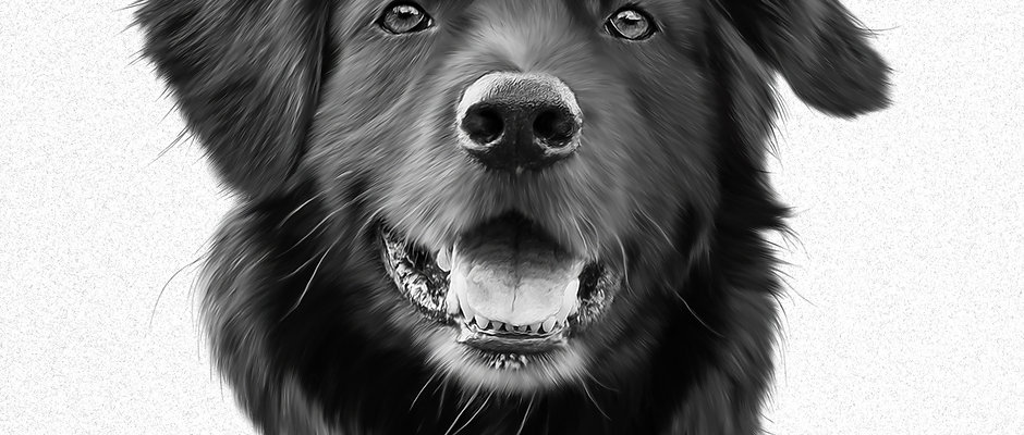 Custom Digital Pet Drawing - Black and White Portrait