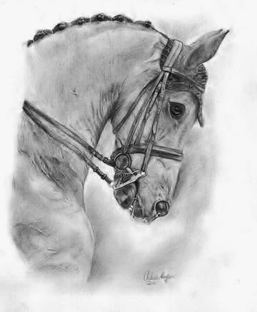 """""""Dressage Horse Portrait"""" 2011"""