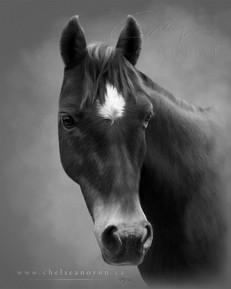 Horse Portrait 2021