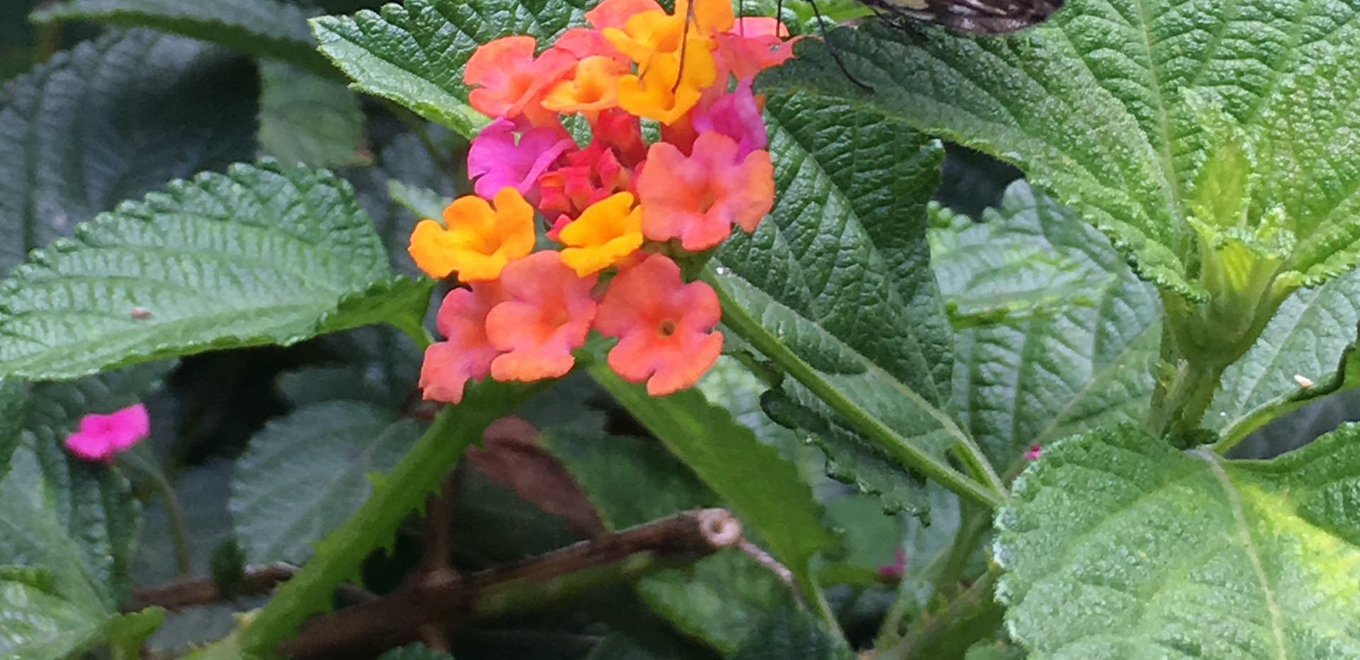 Flora and Mariposa