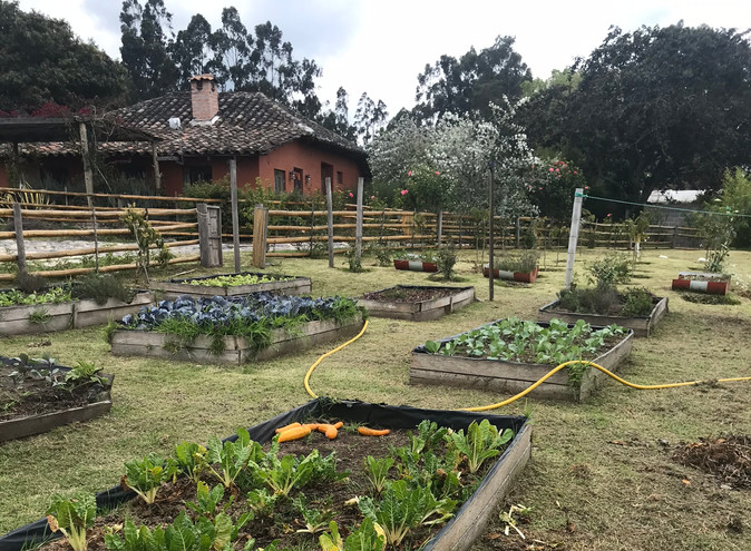 Organic Garden and Sisa