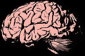 brain-2845862_1280.png