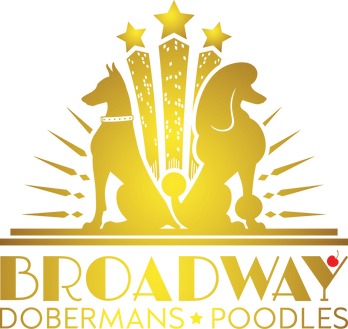 Broadway Dobermans & Poddles Logo V.1.pn