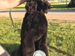 Versace wins best puppy in group at Erie Shores