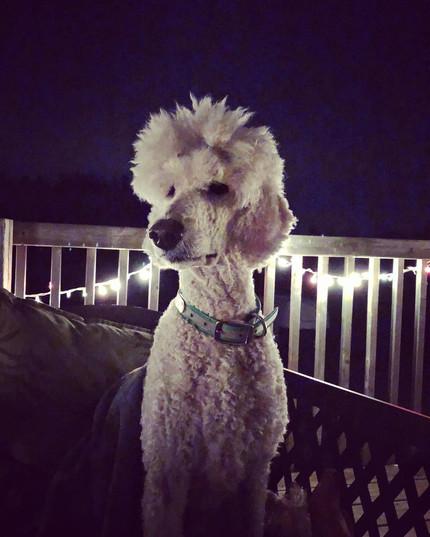 Fancy on the deck.