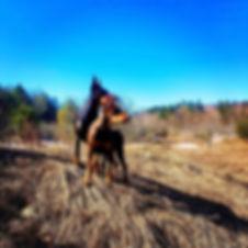 #ionlypostdogpics #dogpicsfordays #dober