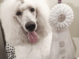 Fancy Places Group 4th Kent Kennel Club