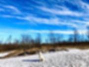 #bluesky #winter #poodle #poodlesofinsta