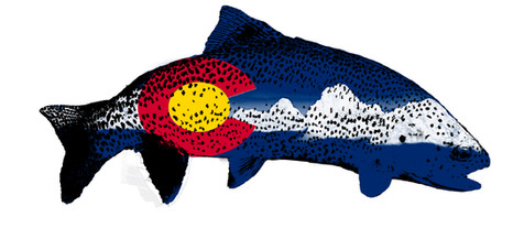Colorado Flag Trout with Mountains and Spots