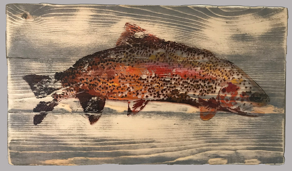 Colored Up Rainbow Trout