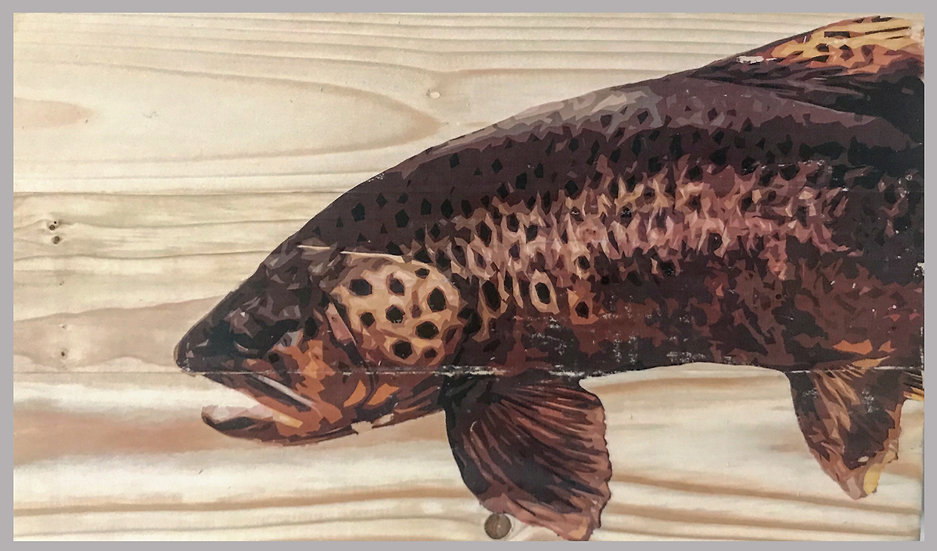 Big Wild Brown Trout with Fins/Spots