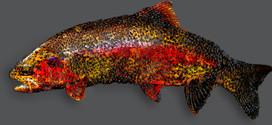 Holey Fish
