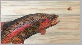 Colorful Rainbow Trout and Stimulator Fl